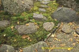 Natural stepping stones in moss ground.